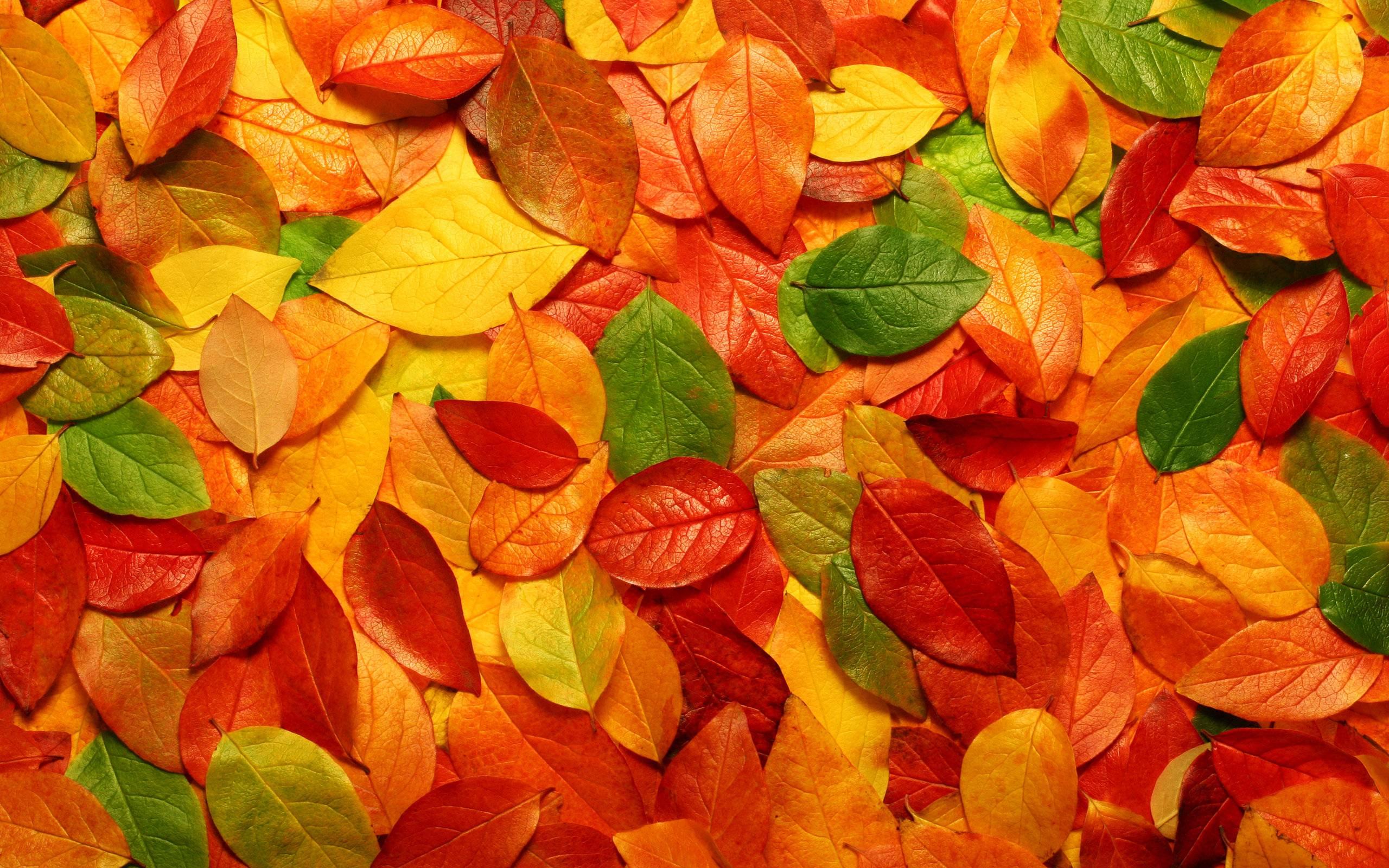 3901238-fall-leaves