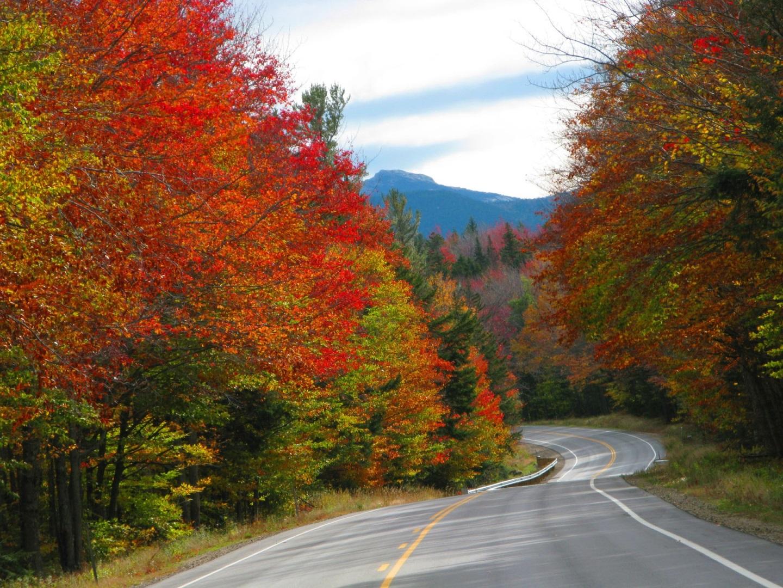 41740200-fall-foliage-jpg