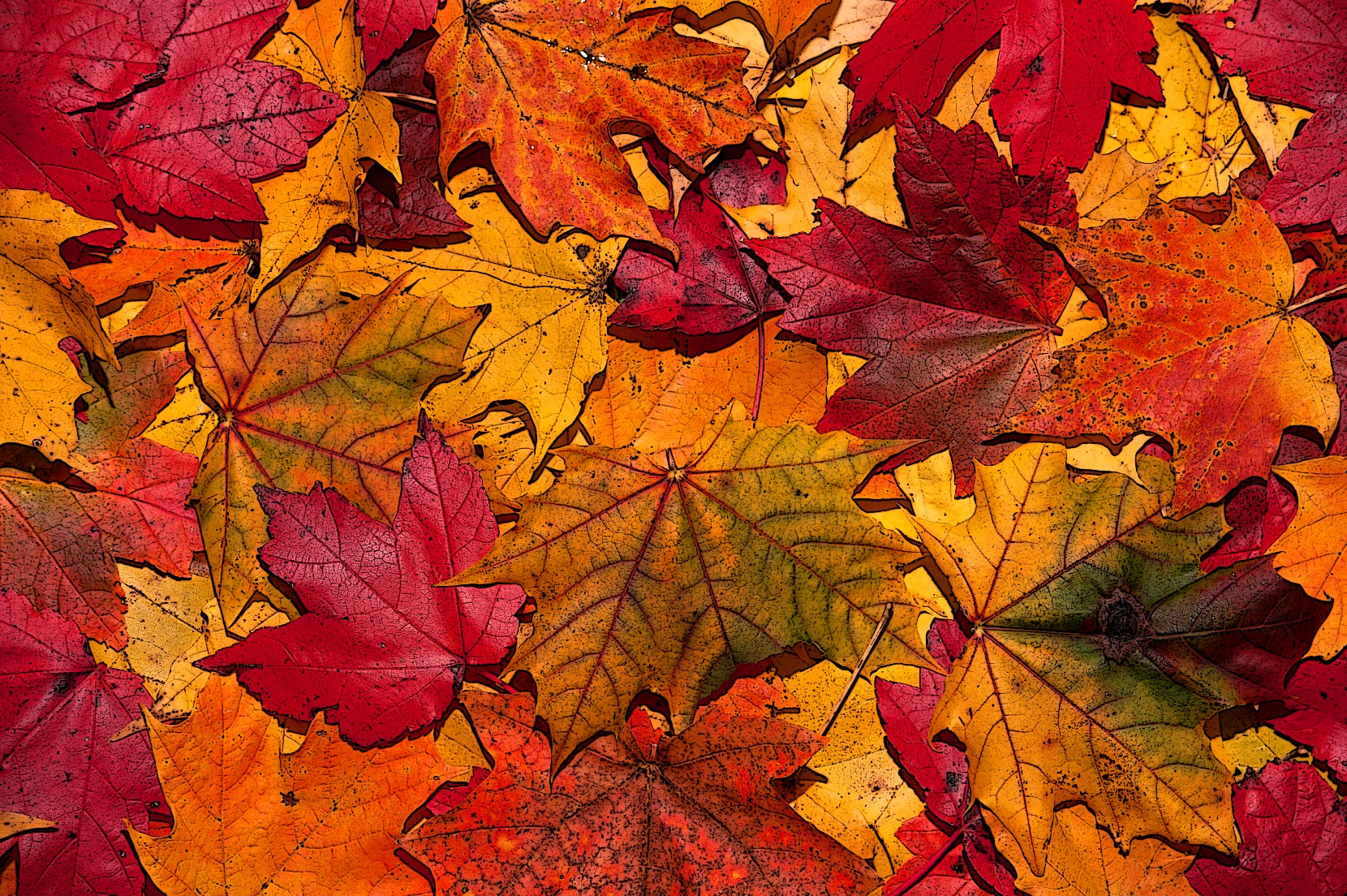5965582-fall-leaves