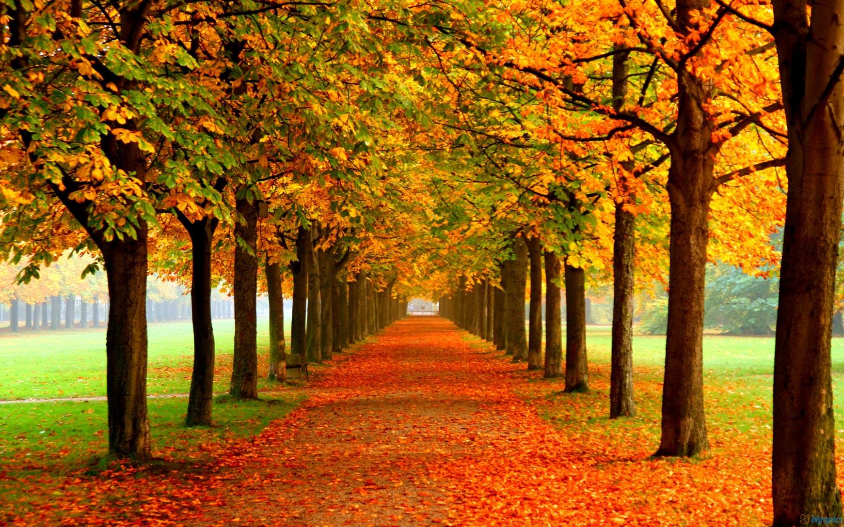 66761165-autumn-leaves