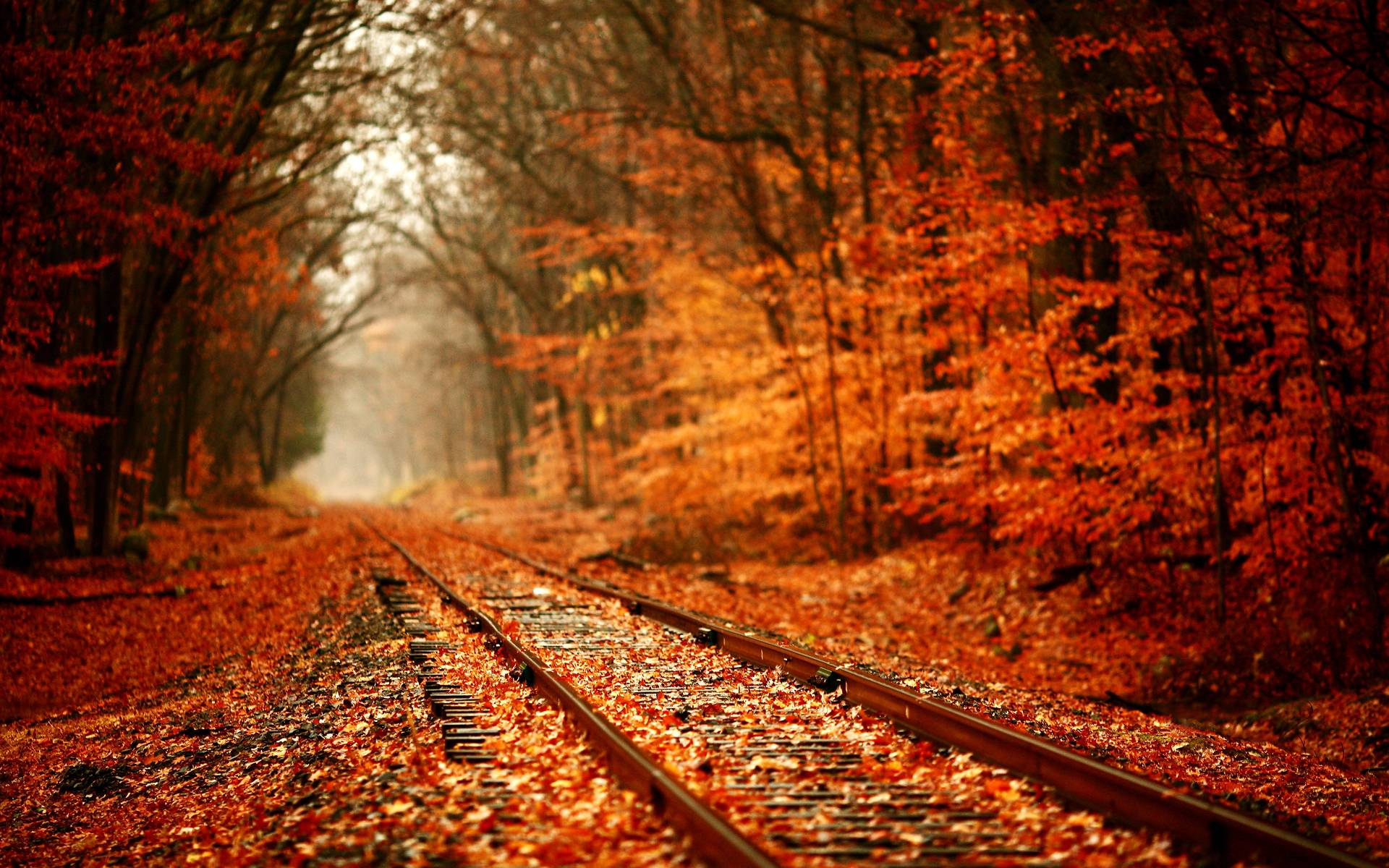 Awesome-Autumn-Leaves-Wallpaper