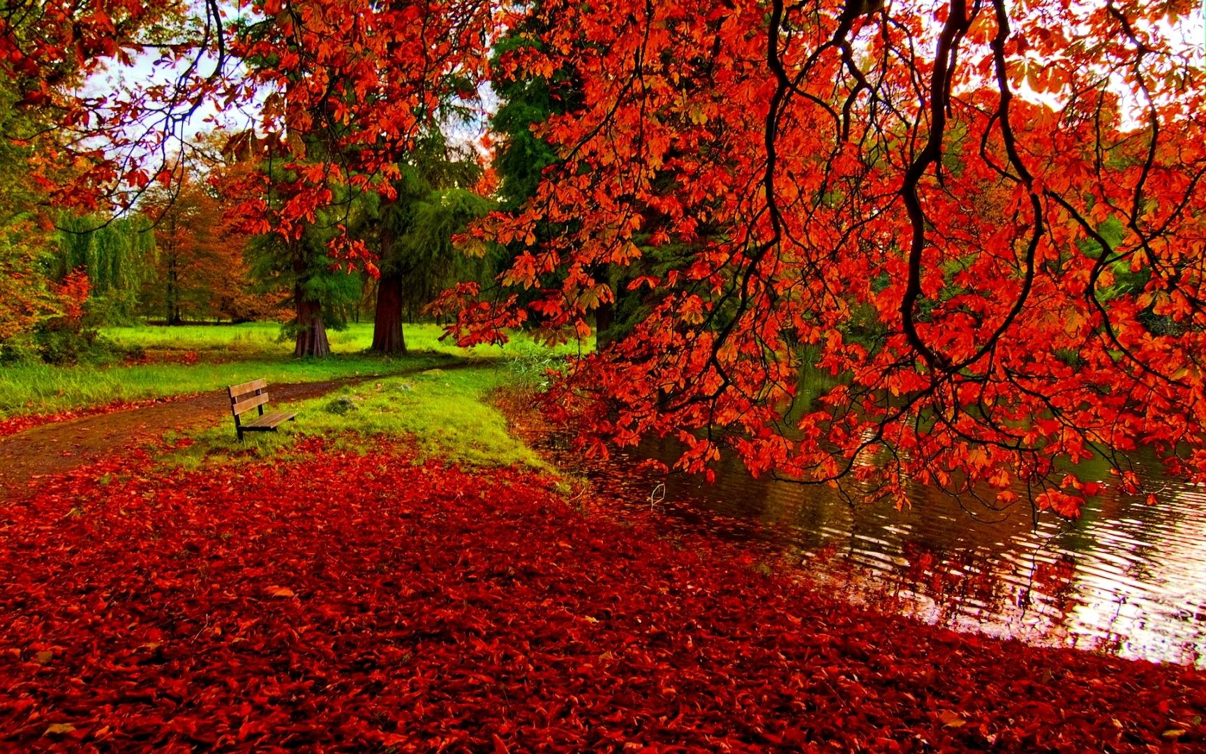 Fall-Foliage-HD-Wallpaper