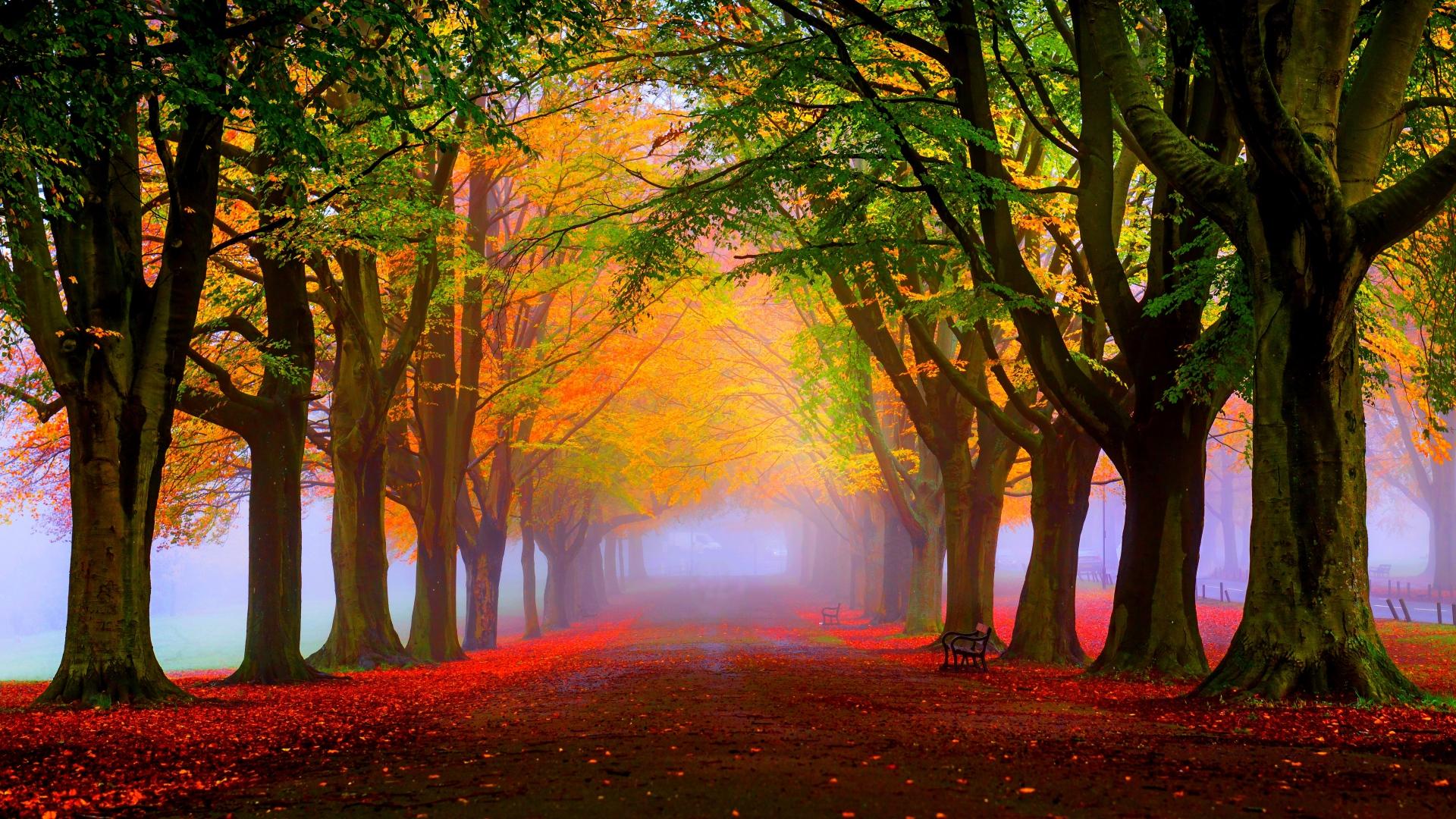 Fall-Foliag