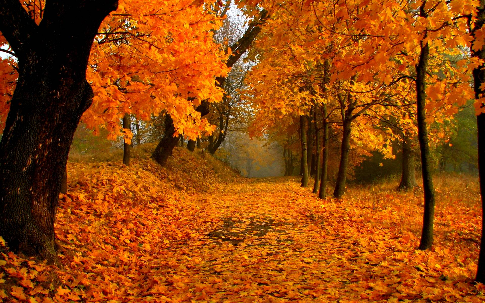 Free-Download-Fall-Foliage-Wallpaper