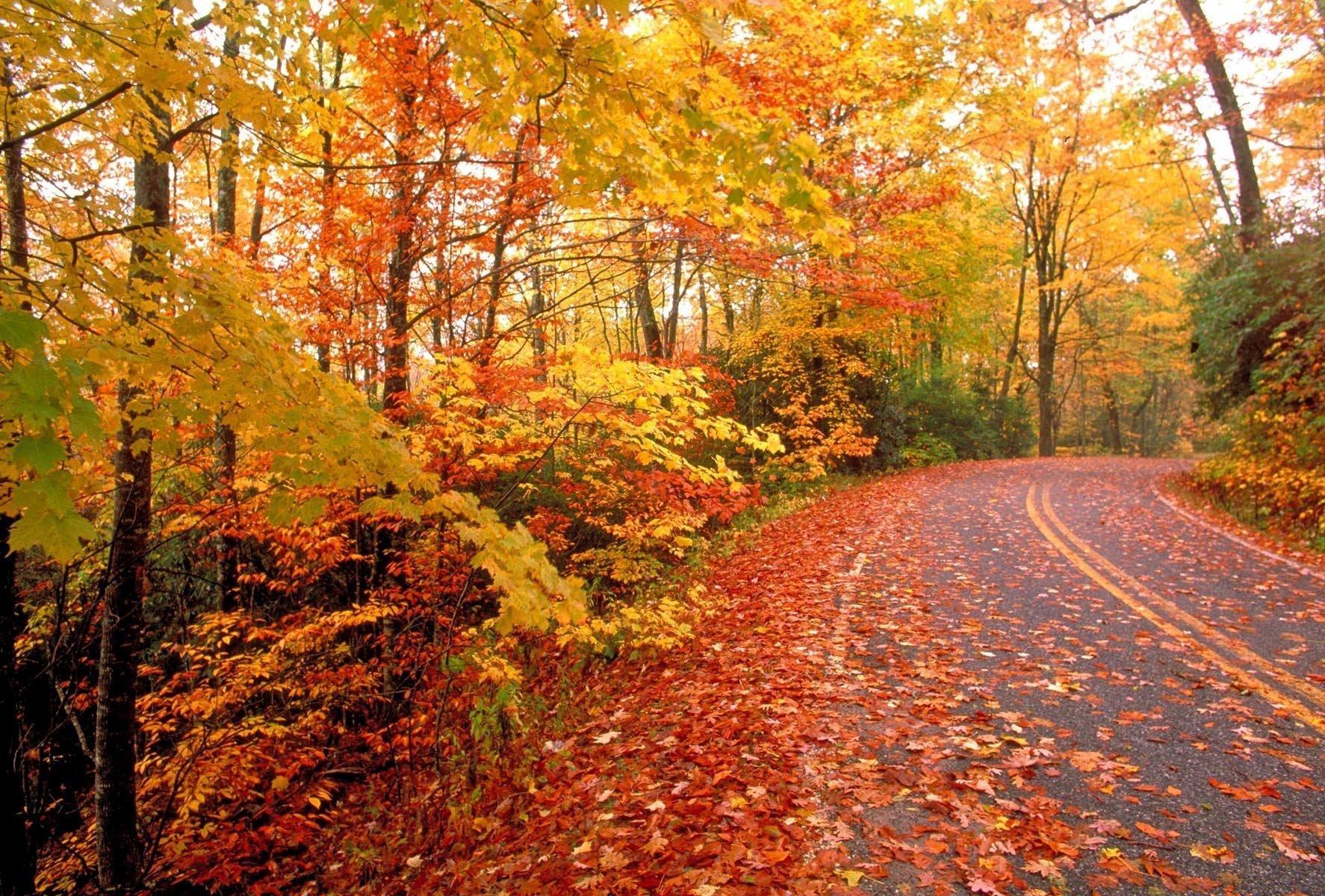 fall-foliage-b5847ff58bbf671e